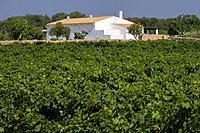 viñas Terramoll, La Mola, Formentera, Balearic Islands, Spain.