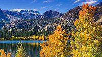 Golden fall aspen at June Lake, Inyo National Forest, Sierra Nevada Mountains, California USA.