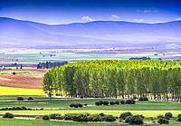 Spain, Castilla La Nueva, Province of Burgos, near Fresno.