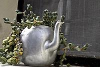 Old Teapot used as a Plant Pot.
