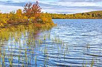 Lake in autumn season with colorful birch trees in yellow and orange surrounding it, Abisko, Kiruna county, Swedish Lapland, Sweden.