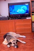 Dog lying next to TV with squirrel.