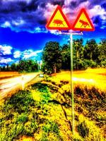 Sign warning of wild boar and moose on road, Sweden, Scandinavia