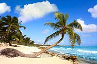 Akumal coconut palm tree beach in Riviera Maya of Mayan Mexico.