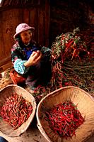 Old Women sorting peppers, puzhehai, Yunnan province, China