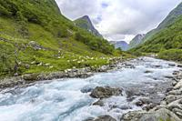 river and goates in the valley Undredalen, municipality of Aurland, Norway, Undredal at the Aurlandsfjorden, Sognefjorden, Sogn og Fjordane county.