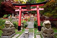 Suehiro ogami shrine with Fuku Kaeru, Fortune Frog shrine at the exit of Fushimi Inari Taisha head shrine. Kaeru means both a Frog and Come back or Re...