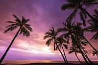 Sunset through palm trees at Pu'uhonua o Honaunau NHP(City of Refuge), Kona Coast, The Big Island, Hawaii USA.