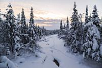 Frozen creek covered with snow, snowy trees and plenty of snow, Gällivare county, Swedish Lapland, Sweden.