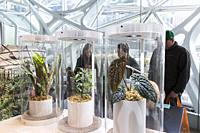 Seattle, Washington: Tropical plants on display at the Spheres Discovery at Understory. The exhibit at the Amazon Spheres opened to the public on Tues...