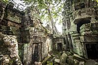 Ruins of Ta Prohm in Angkor compound (Siem Reap Province, Cambodia).