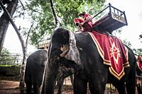 Asian elephants for tourists tours in Angkor (Siem Reap Province, Cambodia).