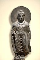 Standing Buddha Shakyamuni stone sculpture in grey schist with halo, urna forehead mark, ushnisha head bump and Greco-Roman toga at ROM Toronto Canada