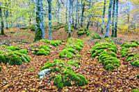 Beechwood. Sierra de Urbasa-Andia Natural Park. Navarre, Spain, Europe.