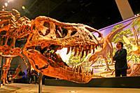 dinosaur skeleton, Tyrannosaurus Rex, Cosmocaixa Museum of Science, Barcelona, Catalonia, Spain