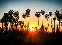 Sunset in Todos Santos, Baja California, Mexico