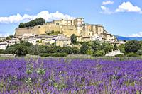 village Grignan situated on a hill with lavender, Provence, France, village with castle Château de Grignan, in Drôme department, region Auvergne-Rhône...