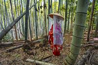 Kumano Kodo pilgrimage route. Daimon-zaka slope. Bamboo trees. Wakayama Prefecture. Kii Peninsula. Kansai region. Honshü Island . UNESCO World Heritag...