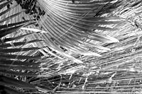 Palm leaves and air root forming a strong graphic abstract design.