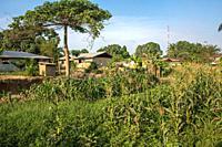 A farm in Ganta, Liberia.