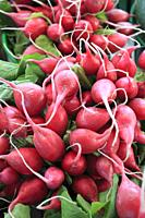 Canada, Montreal, Jean Talon Market, radishes, vegetables, food,.