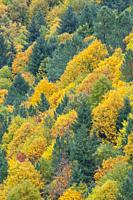 Autumnal forest in Estrela Mountain Natural Park, Portugal.