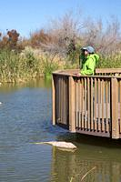 Viewing platform, Clark County Wetlands Park, Las Vegas, Nevada.