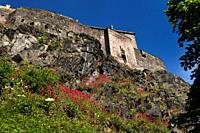 Red Valerian on the Castle Rock cliff face of Edinburgh Castle fortress with blue sky Edinburgh Scotland UK.