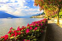 Flowering on the lake side of Bellagio, Province of Como, Como Lake, Lombardy, Italy, Europe.