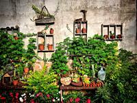 A garden in a farm in Leon, Guanajuato, Mexico