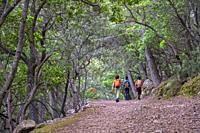 camino de la ermita de Maristella, Fita del Ram, Esporles, Paraje natural de la Serra de Tramuntana, Mallorca, balearic islands, Spain.