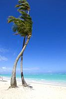 White sand beach, palm trees and crystal clear water, Bávaro beach, Verón Punta Cana, Higüey municipality, La Altagracia province, Dominicanan Republi...