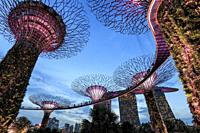 Singapore, Singapore - October 16, 2018: Supetree Grove and Marina Bay Sands hotel at sunset in the Gardens by the Bay in Singapore.