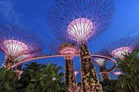 Singapore, Singapore - October 16, 2018: Supetree Grove during the blue hour at the Gardens by the Bay in Singapore.