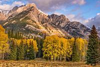 Bow Valley Parkway Fall Aspen at Sunset Banff National Park Banff Alberta Cananda.