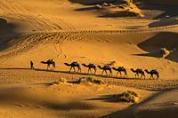 Camel caravan in the Sahara desert near Merzouga, Kingdom of Morocco, Africa.