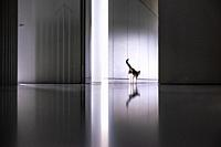 Cat in the minimalistic interior of former Philips factory building Anton at Strijp-S in Eindhoven, the Netherlands.