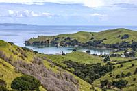 Manaia, Waikato, Coromandel Peninsula, North Island, New Zealand.