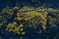 Holm Oak forest, Liendo, Liendo Valley, Montaña Oriental Costera, Cantabrian Sea, Cantabria, Spain, Europe.