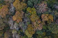 Holm Oak and Oak forest, Tarrueza, Liendo Valley, Montaña Oriental Costera, Cantabrian Sea, Cantabria, Spain, Europe.