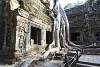 Ta Phrom temple, Angkor, Siem Reap, Cambodia.