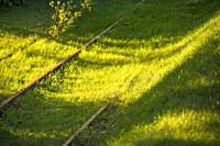 old rails overgrown with grass in light and shadow.