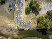 Gabions prevent the banks from washing away at high tide and during heavy rains at the edge of mangrove swamps. East coast of Australia.