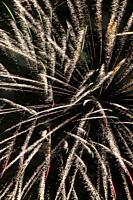 Gold firework , Christmas celebration.
