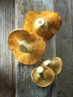 Fresh picked wiild organic Pied de Mouton Mushrooms (hydnum repandum) or hedgehog mushrooms.