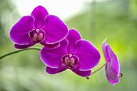DBKU Orchid Garden, Kuching, Sarawak, Malaysia
