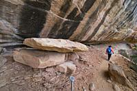 Trail to Mesa Verde's Petroglyph Point, Mesa Verde National Park, Unesco World Heritage Site, Colorado, Usa, America.
