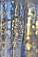 Close up of a row of icicles