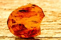 Amber in sun with inclusions.