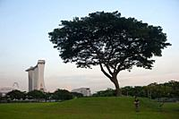 Singapore, Republic of Singapore, Asia - A man is seen standing next to a tree flying a drone over Marina Bay with the Marina Bay Sands Hotel in the b...